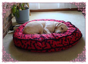 Above is Heidi enjoying her new bed!